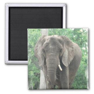 Tusked Elephant Magnet