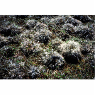 Tussocks Cut Out