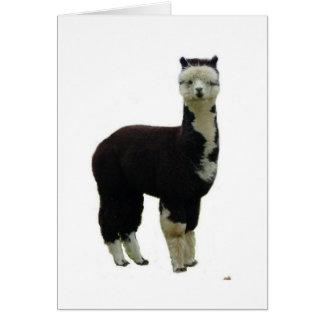 Tuxedo alpaca greeting card