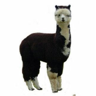 Tuxedo Alpaca Standing Photo Sculpture
