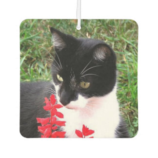 Tuxedo Cat and Main Coon Double Car Air Freshener