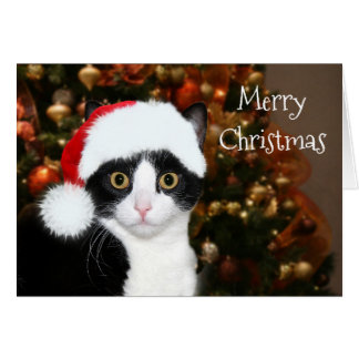 Tuxedo Cat Christmas Greeting Card