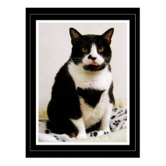 Tuxedo Cat Sticking Out Her Tongue Postcard