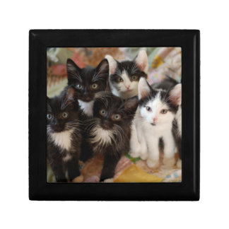 Tuxedo Kitten Group Gift Box