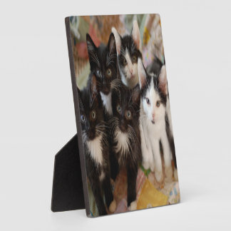 Tuxedo Kitten Group Plaque