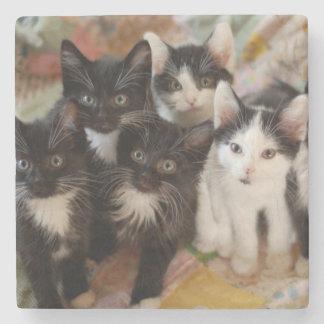 Tuxedo Kitten Group Stone Coaster