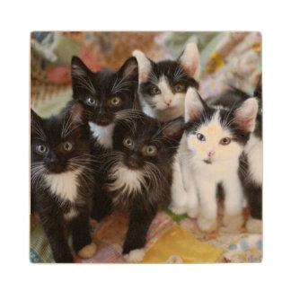 Tuxedo Kittens Wood Coaster