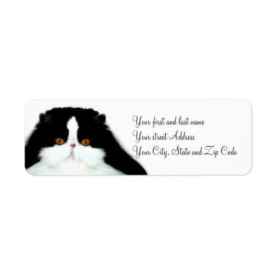 Tuxedo persian cat face