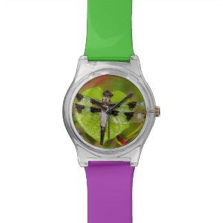 Twelve-spotted Skimmer Watch