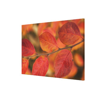Twig covered with autumn leaves stretched canvas print