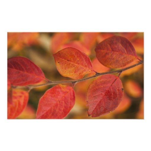 Twig covered with autumn leaves photograph