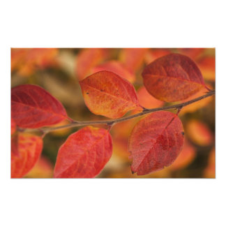 Twig covered with autumn leaves photo print