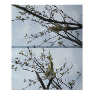 Twig in light green photo