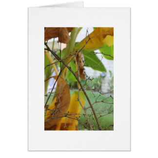 Twigs and Leaves Greeting Card