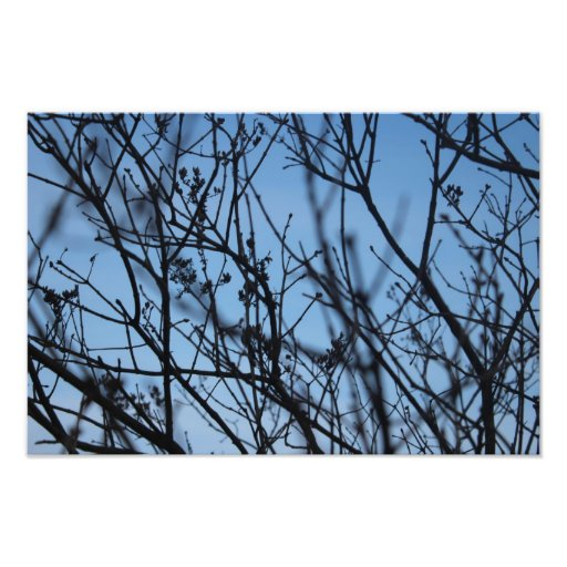 Twigs Photo Art