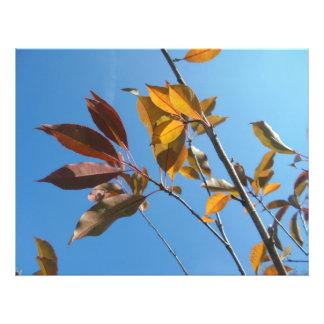 Twigs Photo Print