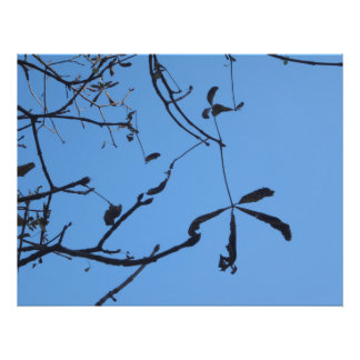 Twigs Photographic Print