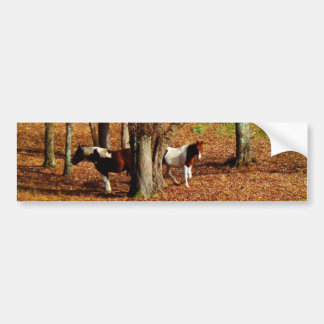 Twin Brown and White Horses Bumper Sticker