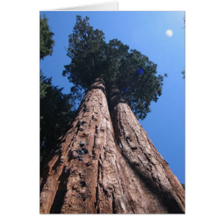 Twin Giant Sequoias, Sequoia National Park Card