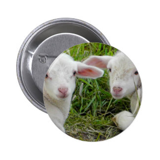 Twin Lamb Baby Animal Thinking Of You 6 Cm Round Badge