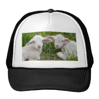 Twin Lamb Baby Animal Thinking Of You Cap