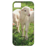 Twin Lambs Grazing iPhone 5 Cases