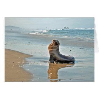 Twin Rocks Sea Lion Note Card