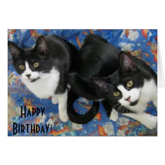 Twin Tuxedo Kittens Birthday Card