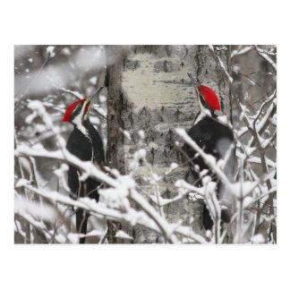 Twin Woodpeckers - Postcard