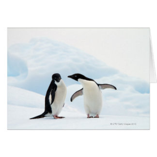 Two Adelie Penguins sitting on a sheet of ice Card