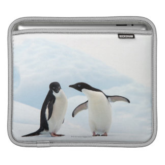 Two Adelie Penguins sitting on a sheet of ice iPad Sleeve