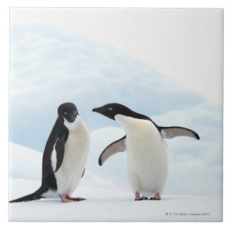 Two Adelie Penguins sitting on a sheet of ice Tile