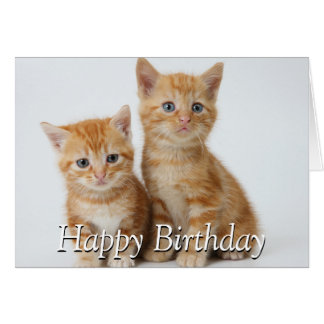 Two Adorable Kittens Card