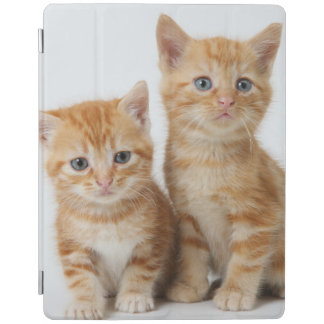 Two Adorable Kittens iPad Cover