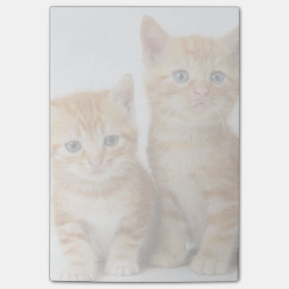 Two Adorable Kittens Post-it Notes