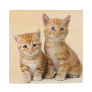 Two Adorable Kittens Wood Coaster