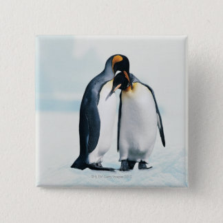 Two affectionate penguins 15 cm square badge