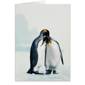 Two affectionate penguins card