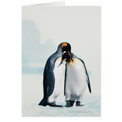 Two affectionate penguins greeting card