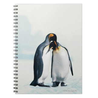 Two affectionate penguins notebooks