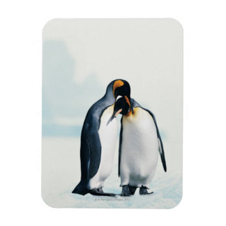 Two affectionate penguins rectangular photo magnet