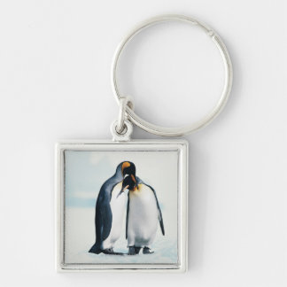 Two affectionate penguins Silver-Colored square key ring