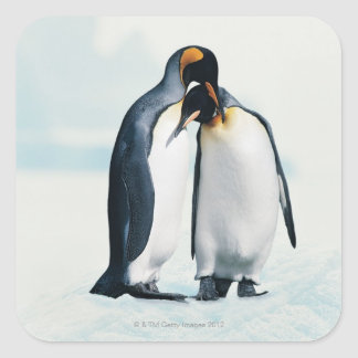 Two affectionate penguins square sticker