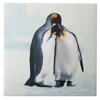 Two affectionate penguins tile