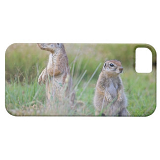 Two alert Ground Squirrels, Jamestown District, Case For The iPhone 5