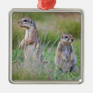 Two alert Ground Squirrels, Jamestown District, Christmas Ornament