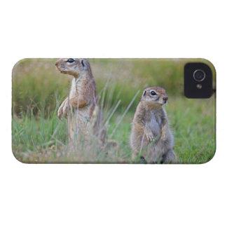 Two alert Ground Squirrels, Jamestown District, iPhone 4 Cases