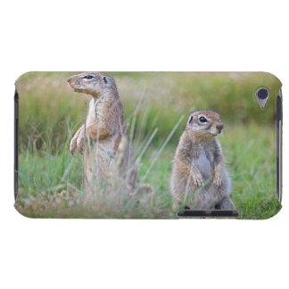 Two alert Ground Squirrels, Jamestown District, iPod Touch Case