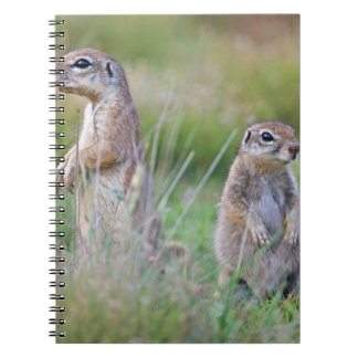 Two alert Ground Squirrels, Jamestown District, Notebooks