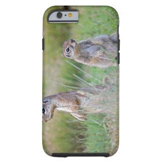 Two alert Ground Squirrels, Jamestown District, Tough iPhone 6 Case